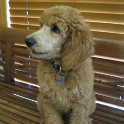 Have you heard about Ear Disease in pets?